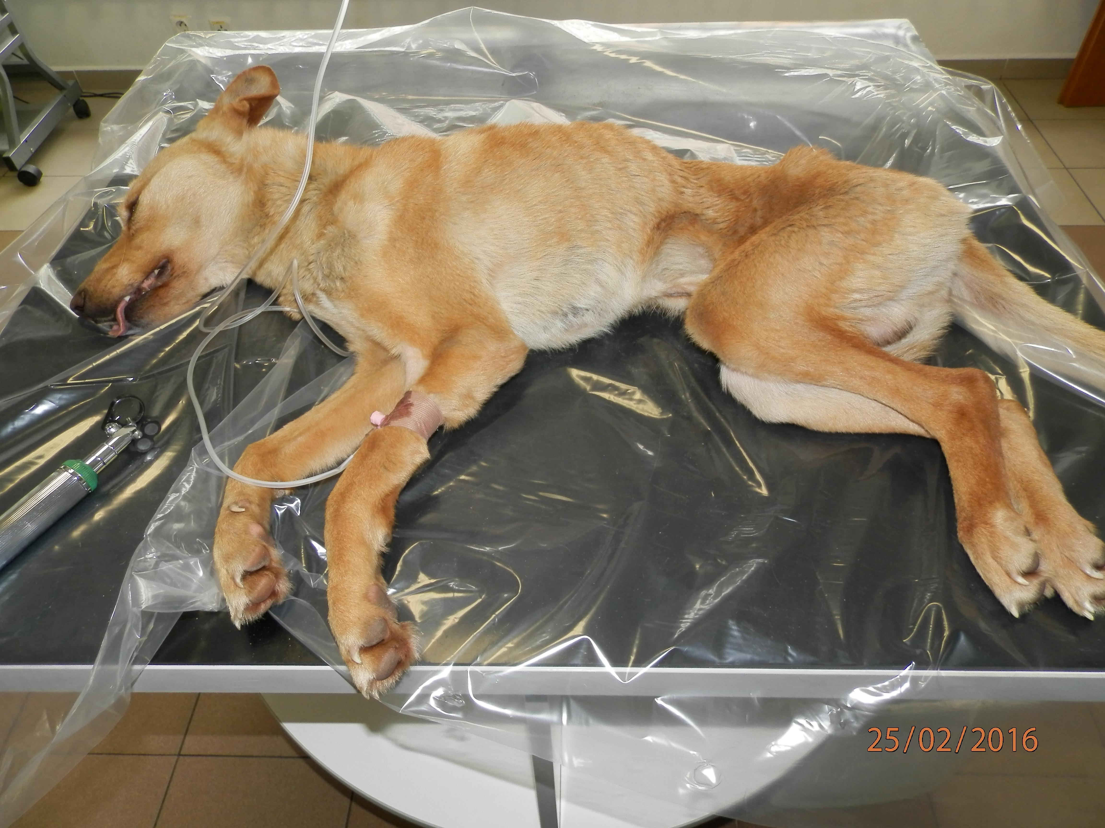Okresný súd v Spišskej Novej Vsi schválil dohodu o vine a treste v prípade  prečinu týrania zvierat 57e4c632dba